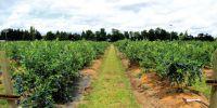 Orman ve Su İşleri Bakanlığı Yeni Bir Eylem Planını Hayata Geçiriyor